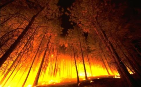 1302505392_forestfire2